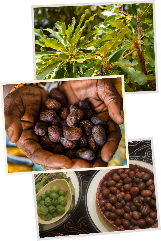 Cacao Images